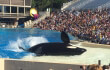 SeaWorld Orca on side