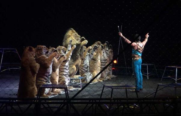 Ringling Bros Tiger Performance