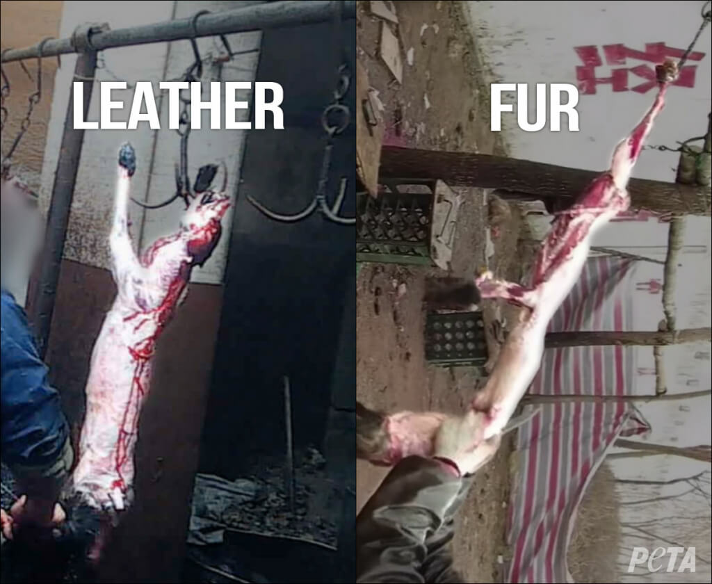 SKINNED Leather vs Fur