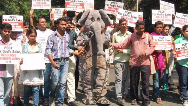 PETA India Protest to Free Sunder