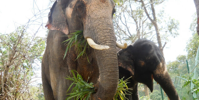 Sunder and girlfriend elephant rescue