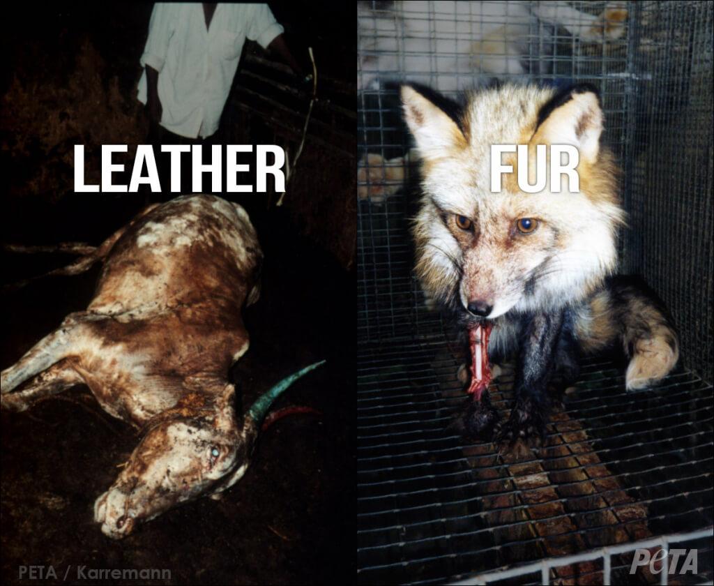 TORTURED Leather vs Fur