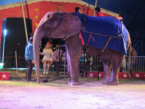Anna Louise at Kelly Miller Circus