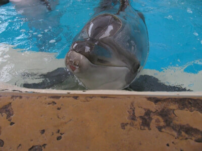 dolphin with injured jaw Seaworld[1]