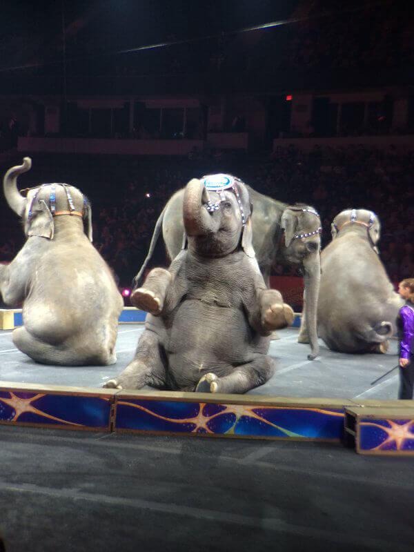 Ringling Bros. Elephants