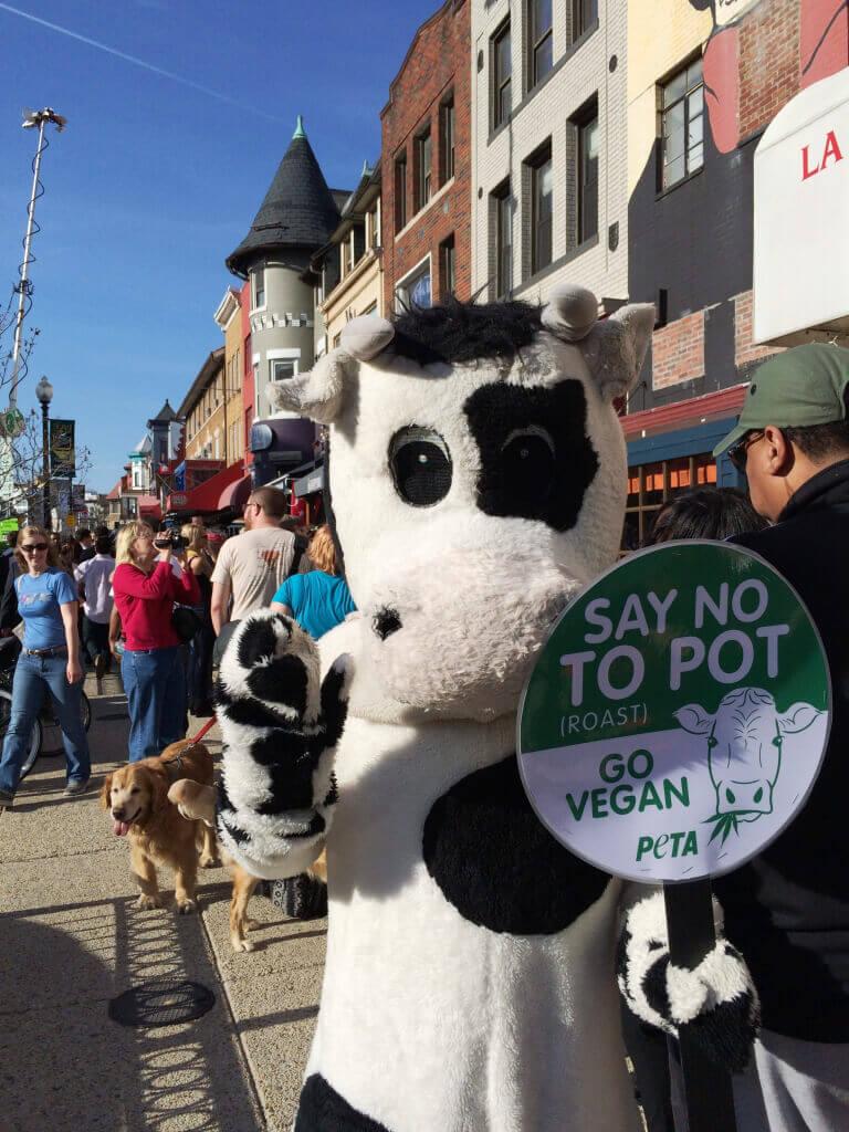 """PETA 'Cow"""" Says Just Say No to Pot (Roast)"""