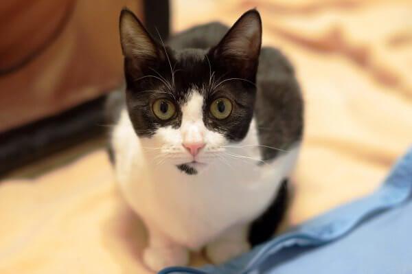 kittens2.24.15_01__1425402041_104.174.50.126