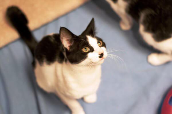 kittens2.24.15_11__1425402070_104.174.50.126