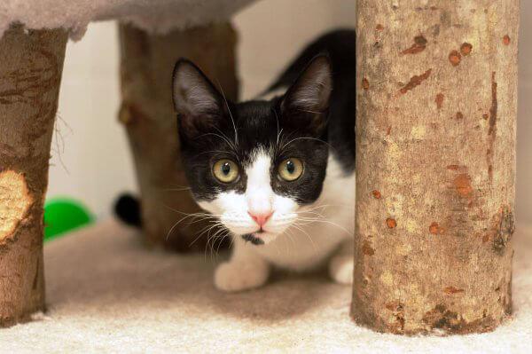 kittens2.24.15_19__1425402089_104.174.50.126
