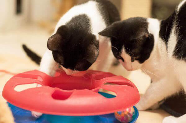 Why All Cats Should Be Indoor Cats | PETA