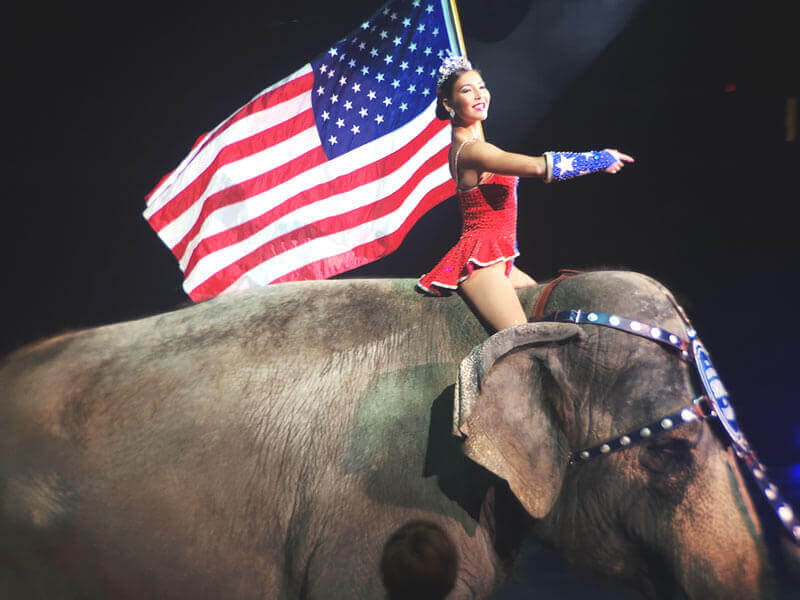 Image result for riding an elephant in the circus