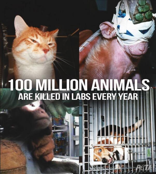 100-Million-Animals-Killed-in-US-Labs-PETA