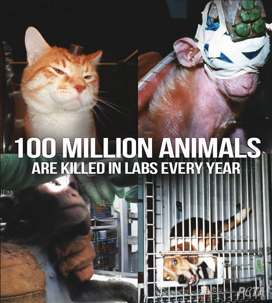 Current Animal Experiments | Features | PETA org
