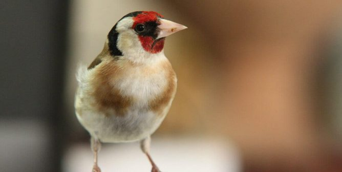 Meet the Intrepid Band of Activists Fighting Illegal Songbird Slaughter