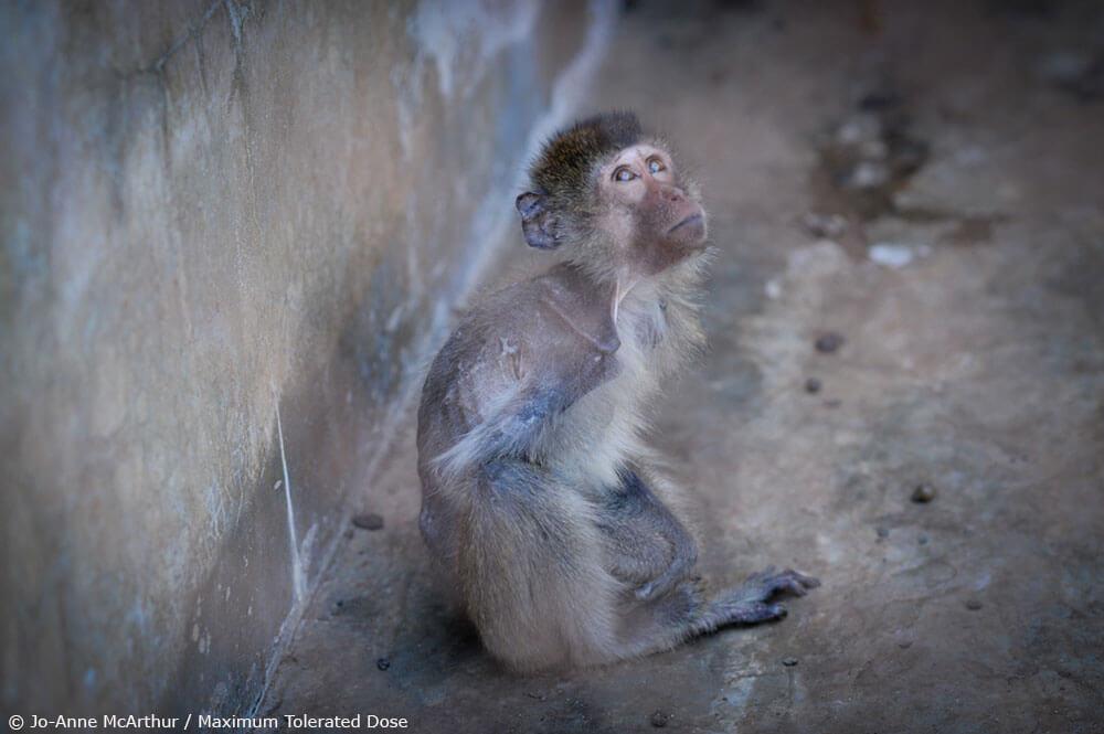 Air France Baby Monkey Breeding Farm