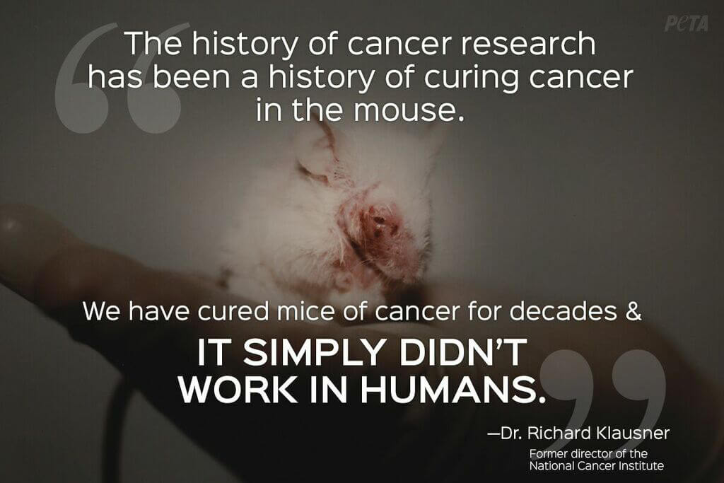 top five reasons to stop animal testing peta animal research quotes