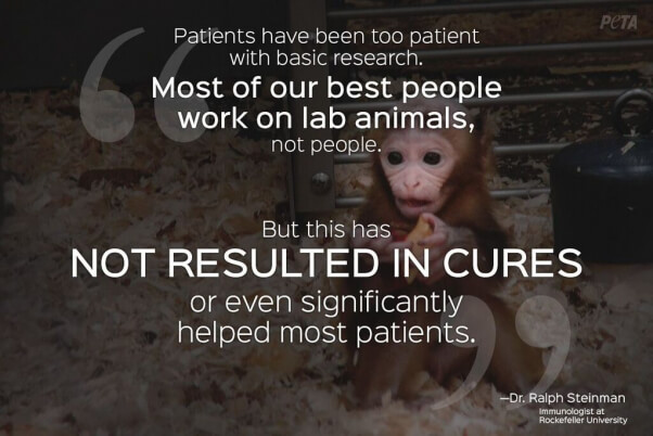expert quotes prove that animal testing is wrong peta
