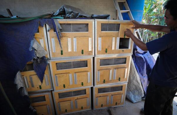 Breeding Facility Monkey Crate