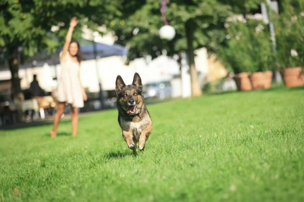 Dog Park Dog Run
