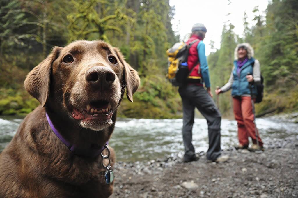 Dog hike dog outdoors dog walk