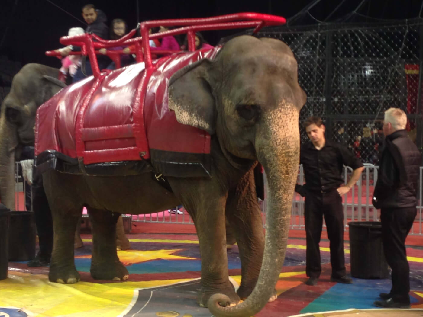 Carden Circus: Elephants and Tigers Are Not Circus Props!
