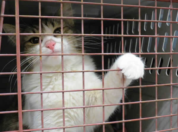 Cat in Carrier at PETA Spay/Neuter Event