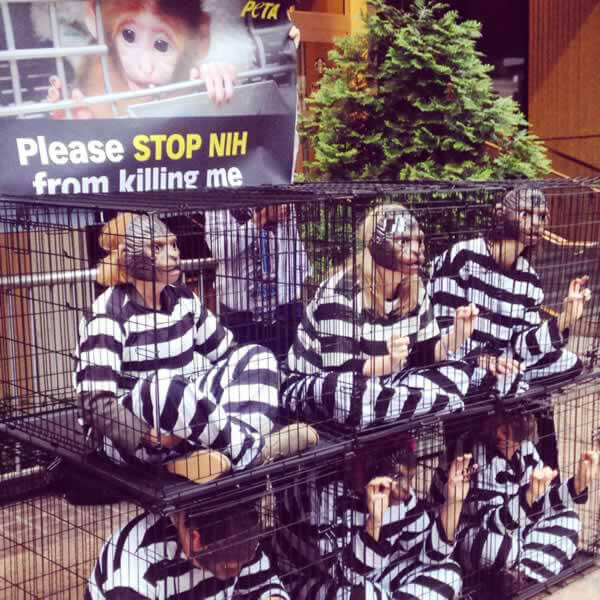 PETA Protests NIH Maternal Deprivation Experiments at National Drug Abuse Summit