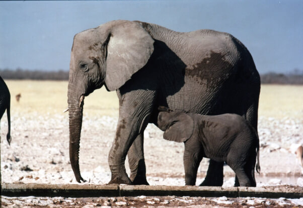 Animal Moms Prove Their Love