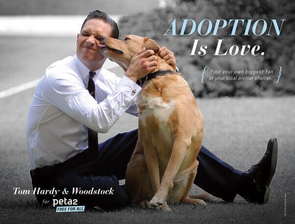 Tom Hardy: Adoption Is Love (peta2)