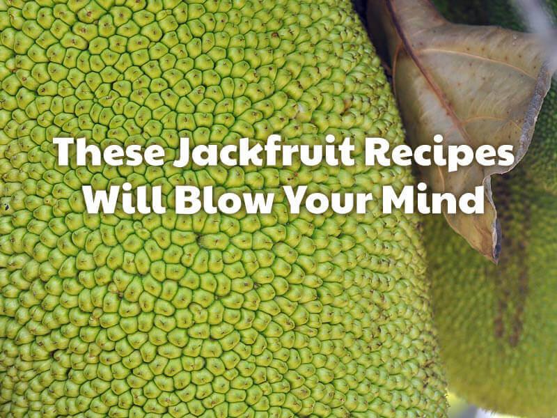 PETALiving-social-jackfruit-recipes-blow-your-mind-2