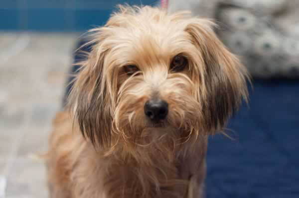 Russell, a Terrier Mix Who's Available for Adoption