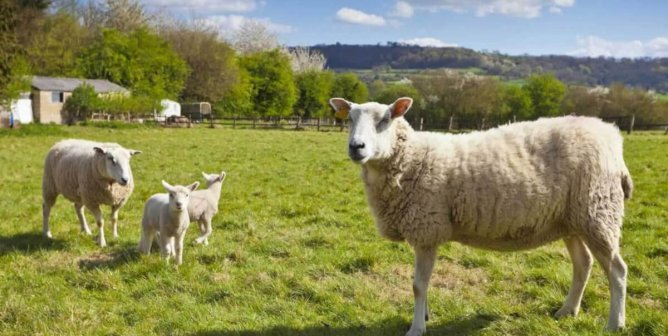 [WATCH] Vegan Wool Is the Fashion Industry's Next Big Thing, and That's Good News for Sheep