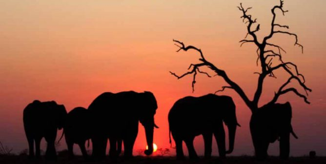 5 Easy Things You Can Do to Help Elephants Right Now