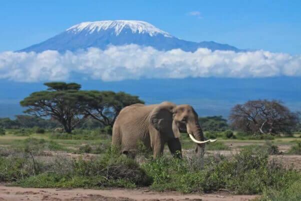 iStock_elephant_mount_kilimanjaro_graemes__1423265222_144.223.39.42