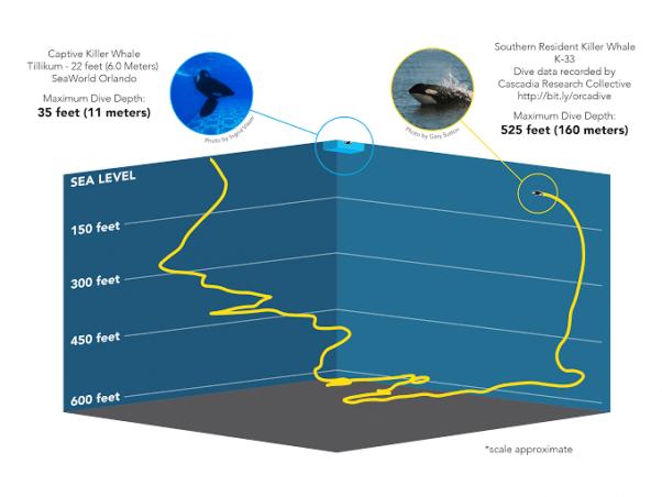 Whale dive graphic