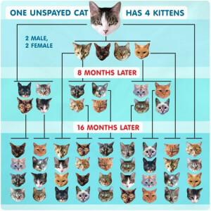 Cat Overpopulation peta2 Graphic