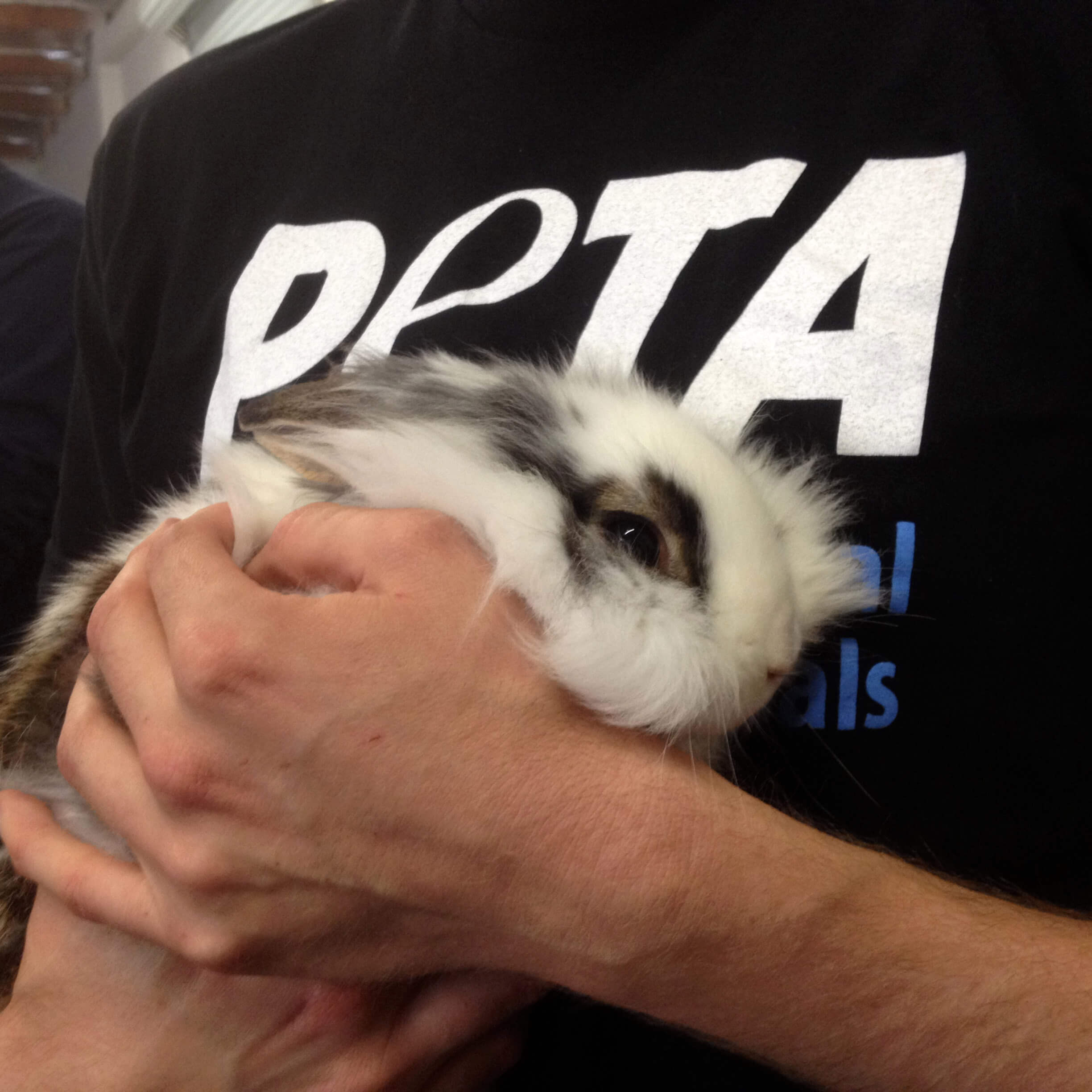 Rabbits Are NOT Starter Pets, Caring for Them Is Hard | PETA