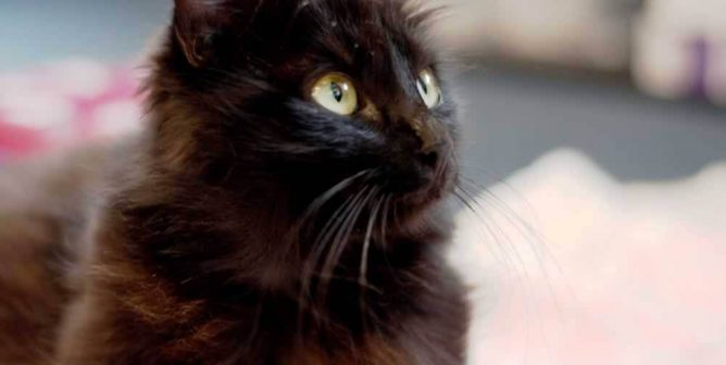 7 Times Black Cats Saved People's Lives Like It Wasn't a Thing