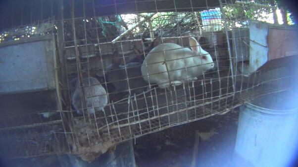 Cherry Valley Rabbit Bunny Rescue