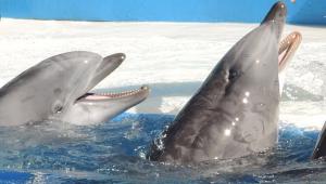 Aquariums and Marine Parks