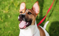 The Life Saved by Spaying Might Be Your Own Dog's