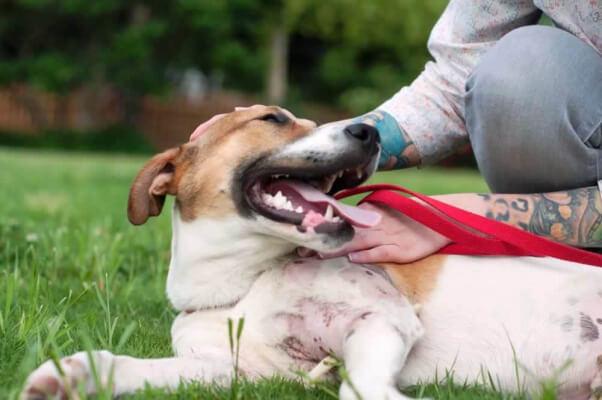 Joey, a dog available fr adoption