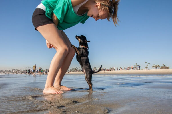 Skippy the Chihuahua dog at the beach 2