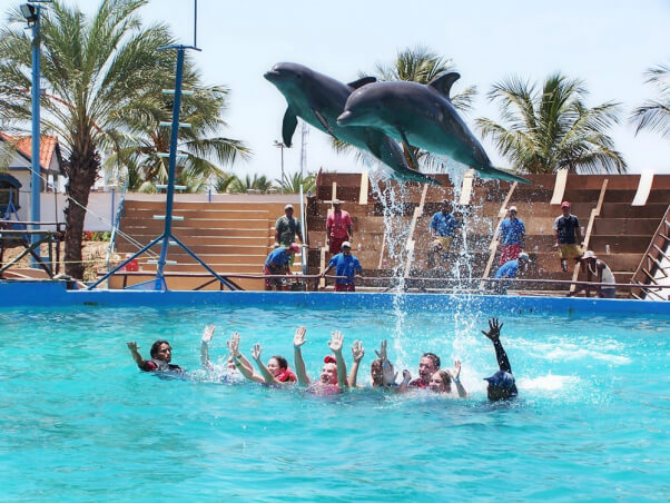 If You Love Dolphins, Don\'t Ever Pay to Swim With Them | PETA