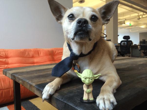 Yoda with Dog