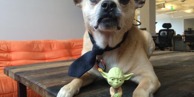 Vegan, Yoda Was