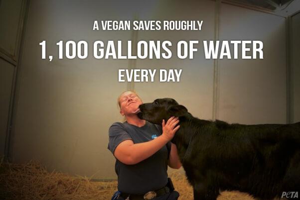 vegans save water
