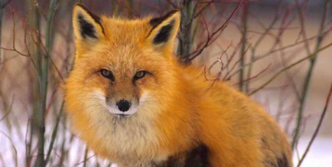 INTERMIX Bans Fur, Making Gap Inc. Completely Fur-Free