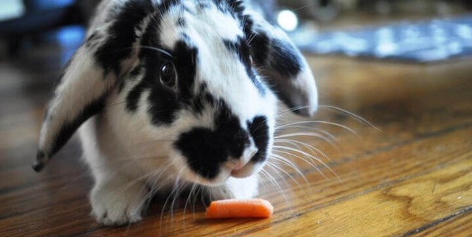 45 Bunny Facts to Make You Go 'Squee!'