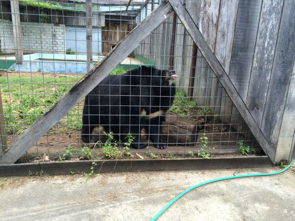 2015-06-09_bear-lick-fence_Tri-State_Zoo_IMG_3463